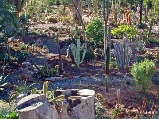a-real-succulent-garden-2.jpg