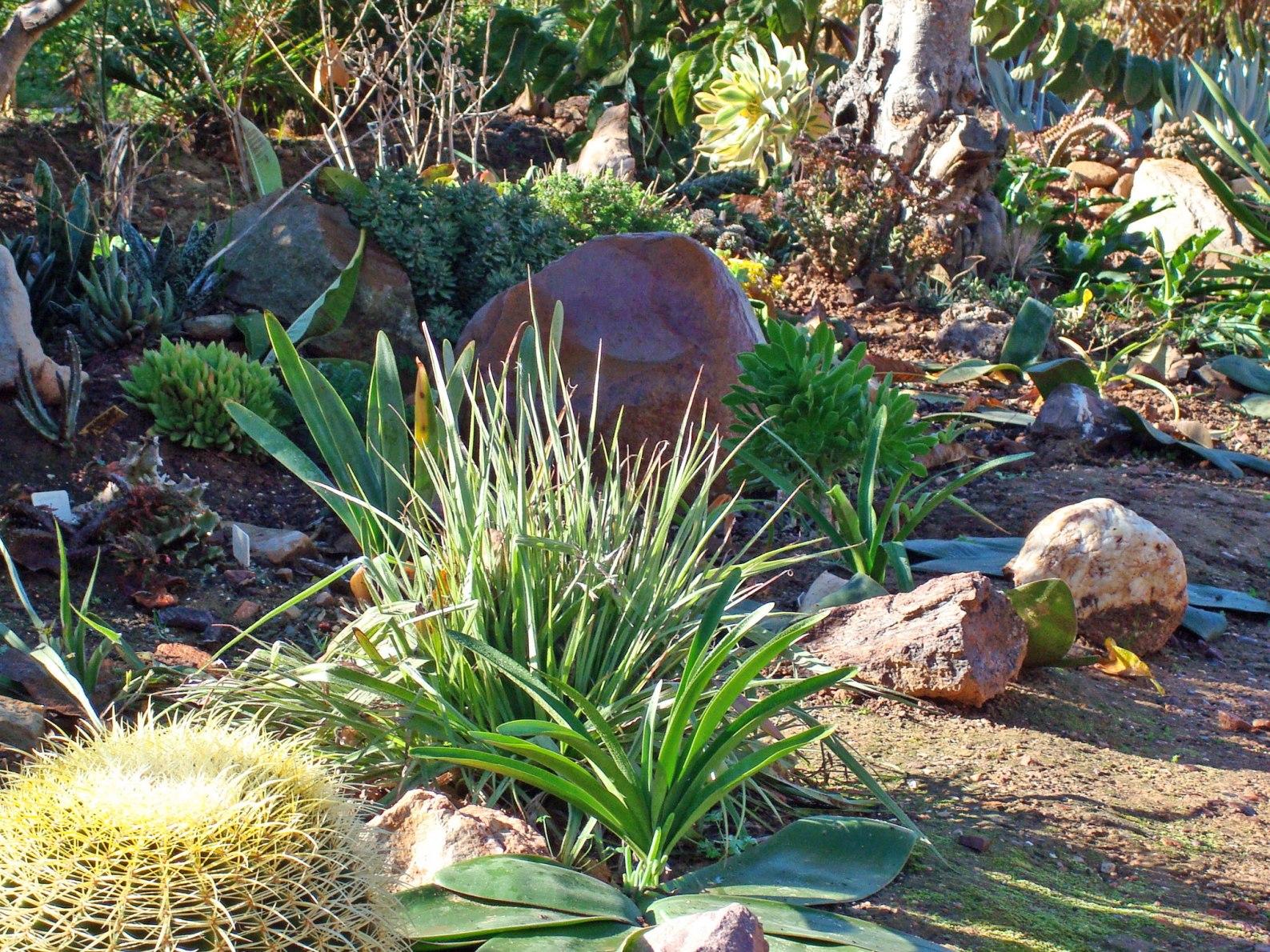 a-real-succulent-garden-5.jpg