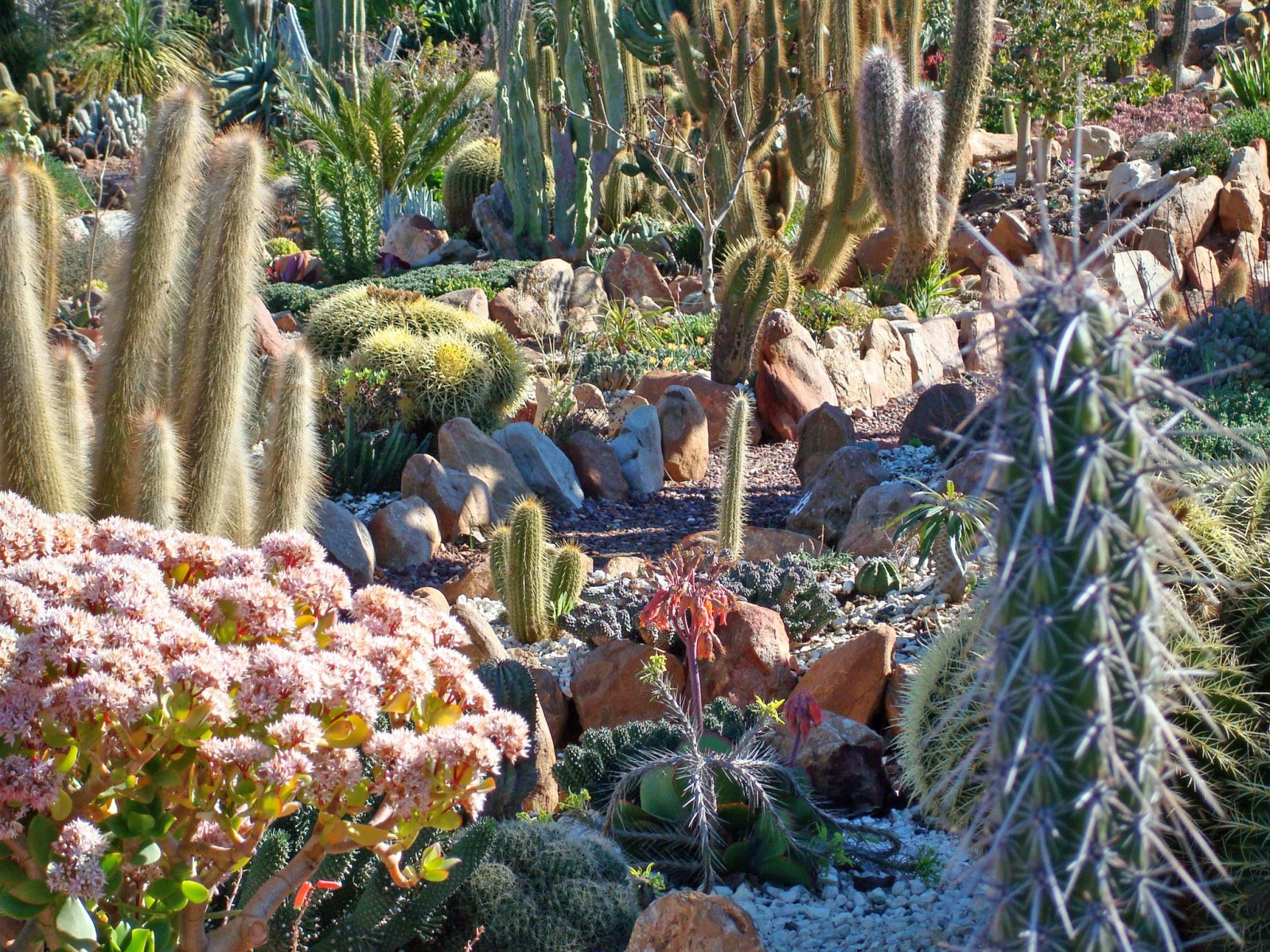 homepage-under-succulent-garden-afternoon.jpg