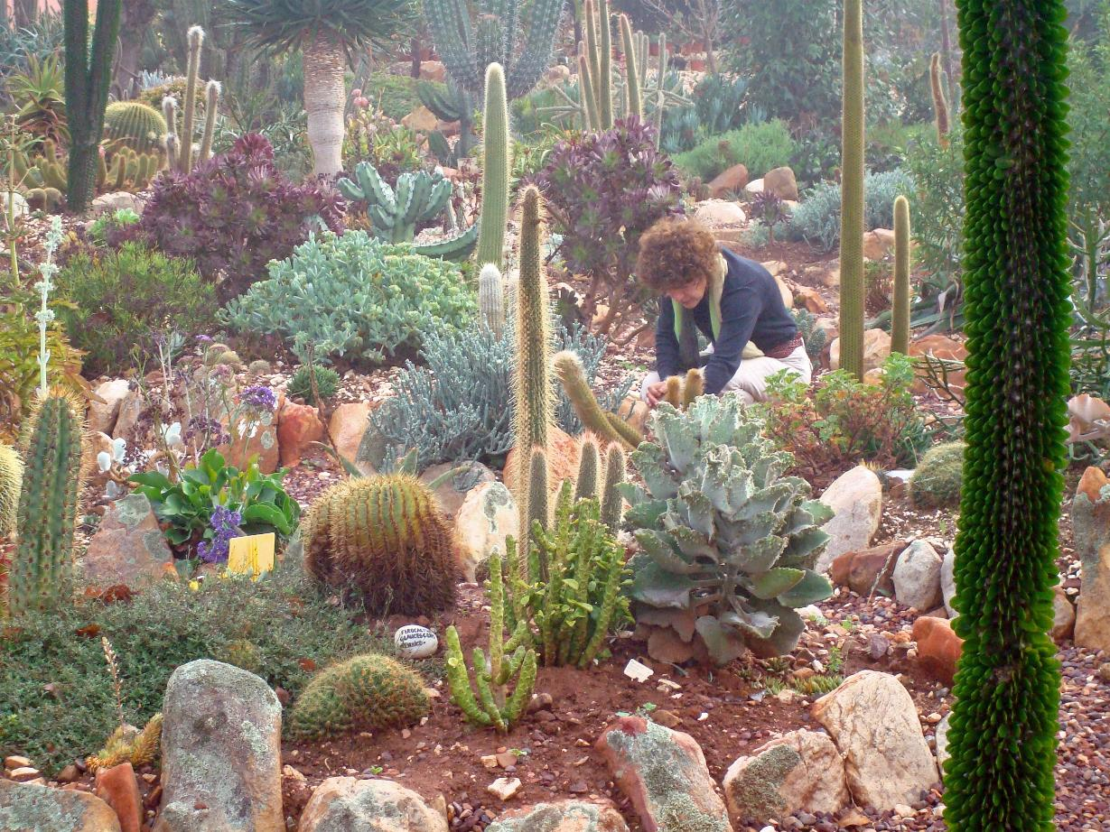 Almost 2500 Different Species Of Succulent Plants Outdoors