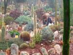 'Landmark' in garden